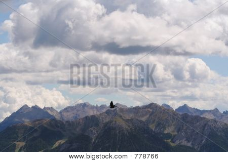 Alpine chough,Dolomites