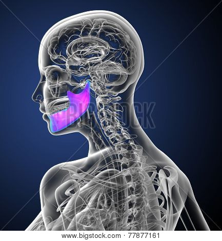 3D Render Medical Illustration Of The Jaw Bone