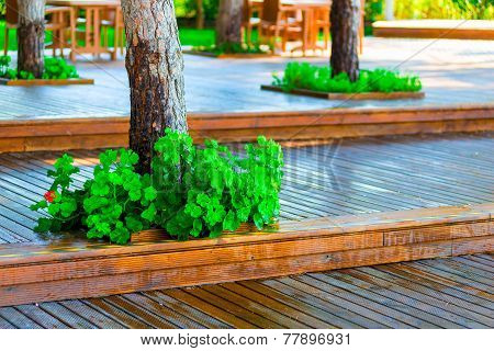 Wooden Flooring In The Park And Well Maintained Trees