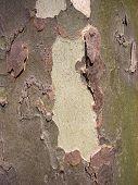 Bark 4 poster