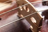 stock photo of violin  - Macro view on violin strings and violin body - JPG