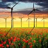 picture of turbines  - Spring landscape with red poppy field and wind turbines in the sunset - JPG