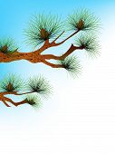 pic of pine-needle  - illustration pine - JPG