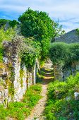 stock photo of greenery  - The stone walls are covered with the lush greenery Stari Bar Montenegro - JPG
