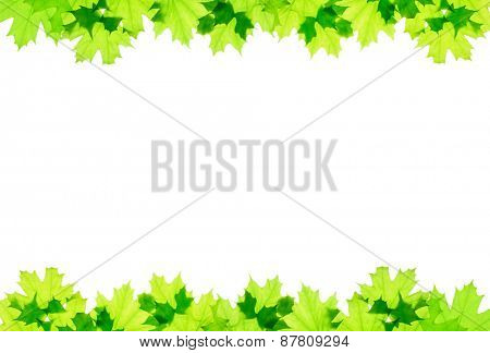 Frame of green maple leaves isolated