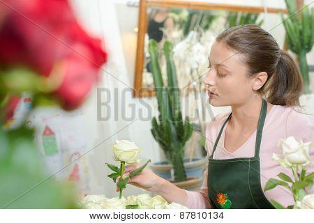 Florist holding rose