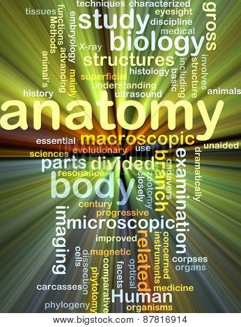 Background text pattern concept wordcloud illustration of anatomy glowing light