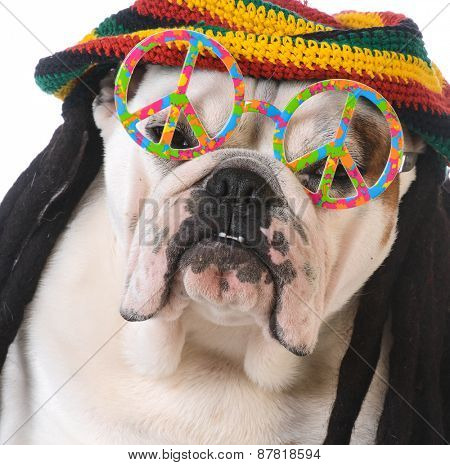 funny dog with dreadlock wig and peace glasses on white background