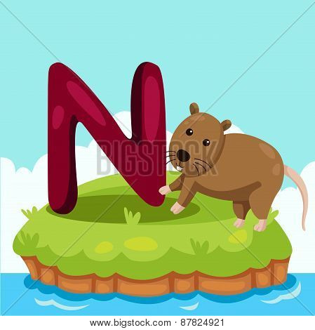 Illustrator of Letter 'N is for Nutria'