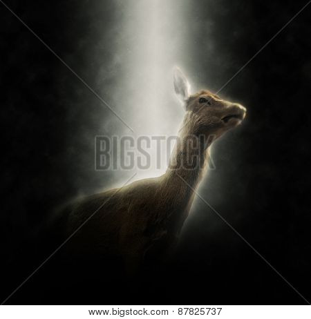 Square Image of Doe Female Deer Illuminated in Spotlight with Dark Background, Low Angle ViewDoe Illuminated in Spotlight on Dark Background, Low Angle View