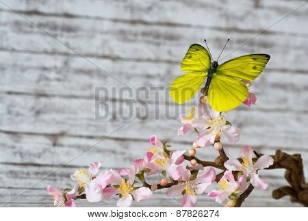 Attractive Yellow Green Butterfly on a Flowering Stem of Fresh Beautiful White and Pink Cymbidium Orchid