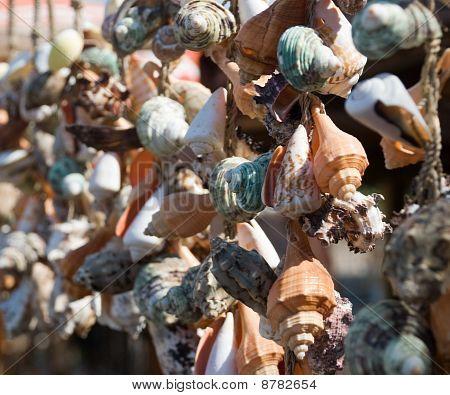 Hanging Sea Shells