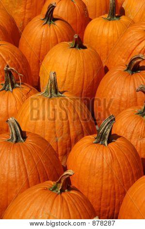 Bunch Of Pumpkins Vertical 1