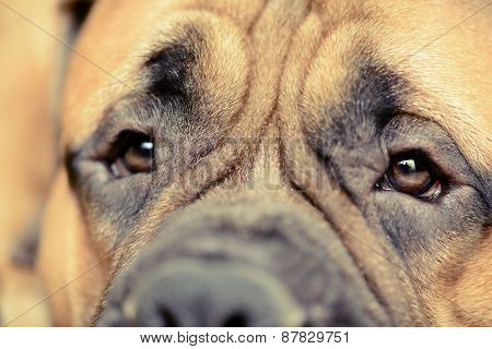 Dog's Eye Close-up