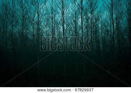 Silhouette Of Pine Forest With Mystic Sky
