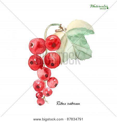 branch of ripe red