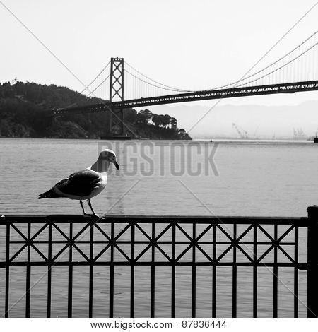 Seagull and Oakland Bay Bridge in background