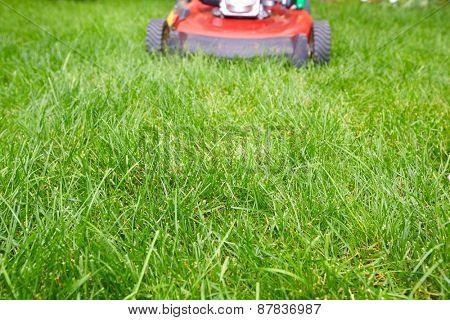 Lawn mower cutting green grass in backyard.Gardening background.