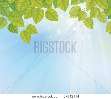 Vector green birch leaves on sky background.