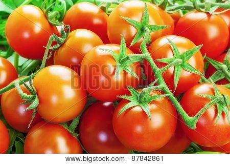 Red tomatoes with greens