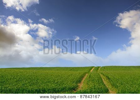 Field With Tractor Traces Against Blue Sky With White Clouds