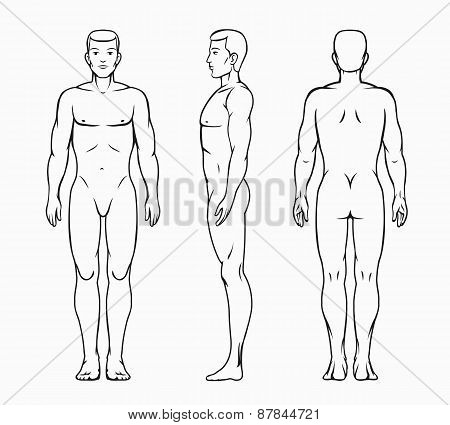 Male body vector illustration