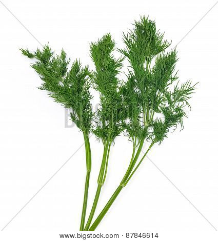 Three Branch Of Dill