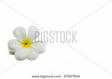 Single Plumeria Isolated On White.