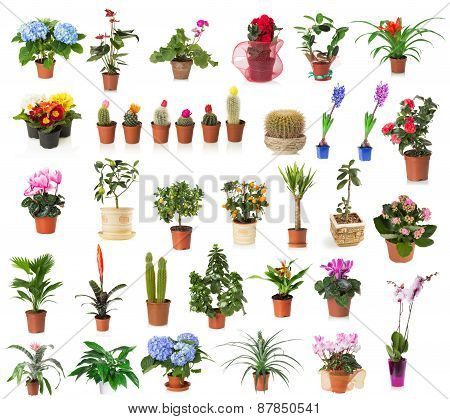 Set Of Houseplants Isolated On The White Background