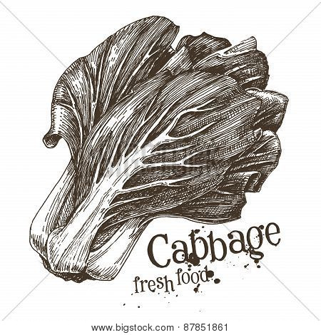 cabbage vector logo design template. fresh vegetables, food or harvest icon.