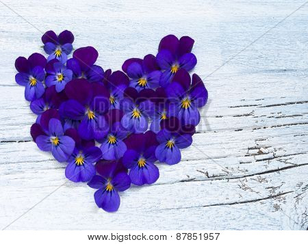 heart made of beautiful wild violets