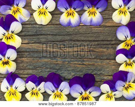 frame made of violets