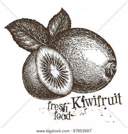 kiwi vector logo design template. fresh fruit, food or harvest icon.