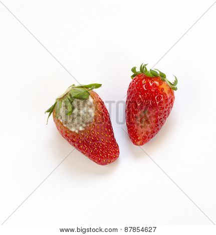 Rotten Strawberry Isolated On White Background