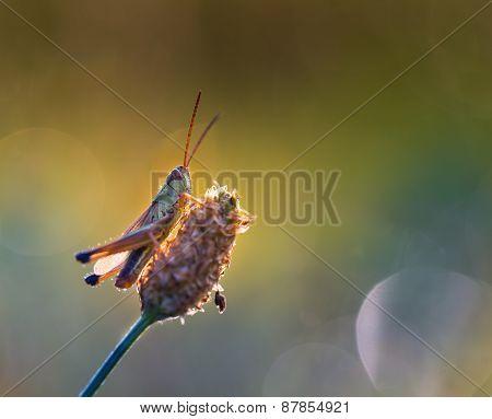 Beautiful Grasshopper Resting On Grass..