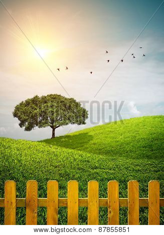 Beautiful grass hills with a tree and a wooden fence under sunny weather