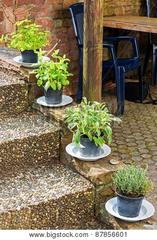 Herbs In Plant Pots Growing On The Garden Stairs