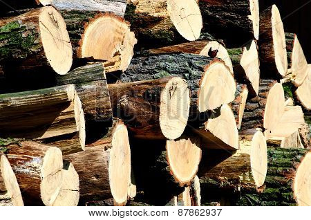 Pile Of Oak Wood With A Butterfly