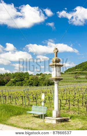 vineyard near Retz, Lower Austria, Austria
