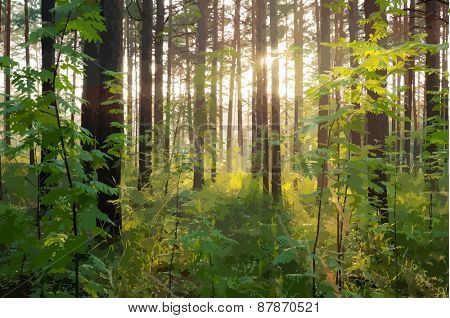 beautiful sunset in the woods , vector
