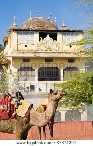 Camel And Traditional Architecture, India