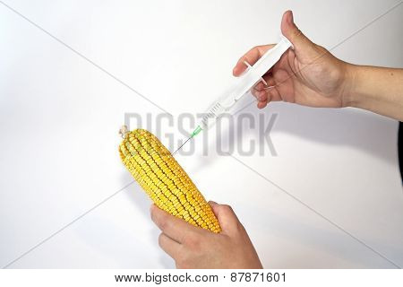 Genetically Modified Organism - Corn
