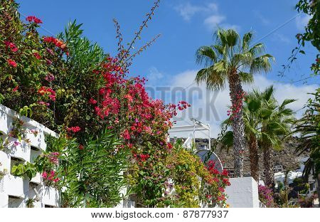 Fence With Bougainvillea In Los Gigantes, Tenerife, Canary Islands, Spain.