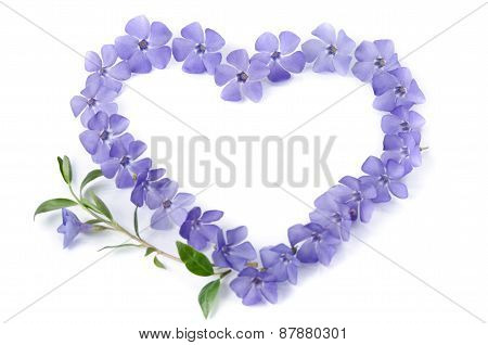Beautiful Periwinkles In  Shape Of Heart On White Background