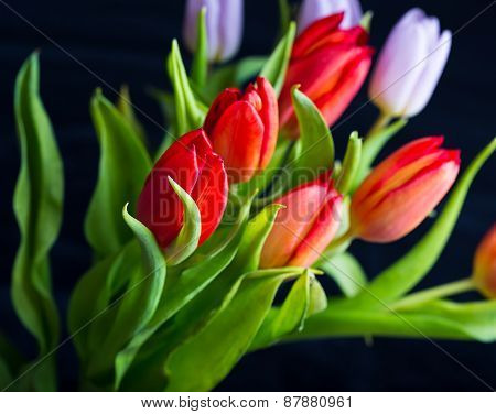 Tulips Bouquet Isolated On Black Background