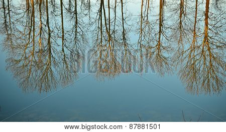 Tree reflections in the lake