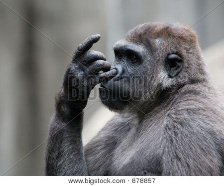 Gorilla3989
