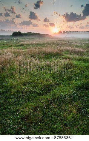 Summer misty dawn on the meadow