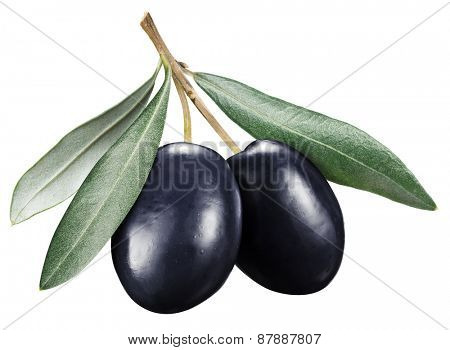 Black olives with leaves on a white background. File contains clipping paths.
