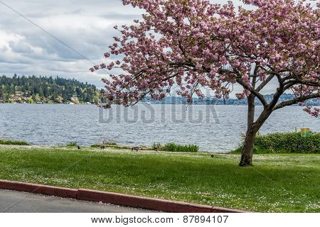 Lake Washington Seen From Seward Park